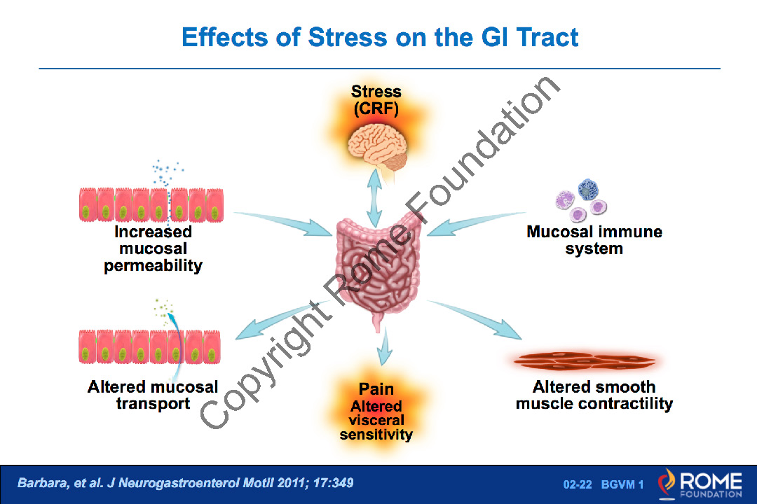 Basic Science 22 Effects Of Stress On The Gi Tract Rome Online